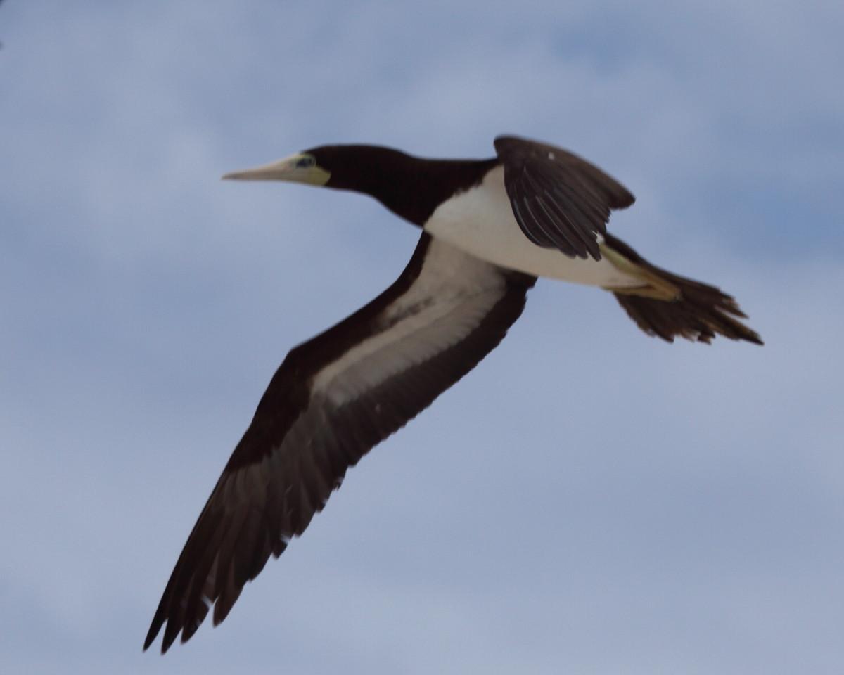 Australlia Rv Caravan Birding Amp Nature Tour Description